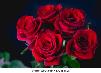 Beautiful valentines roses on dark background