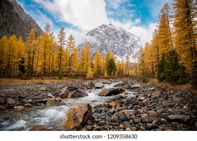 The beautiful valley with a fast mountain stream. Aktru. Altai.