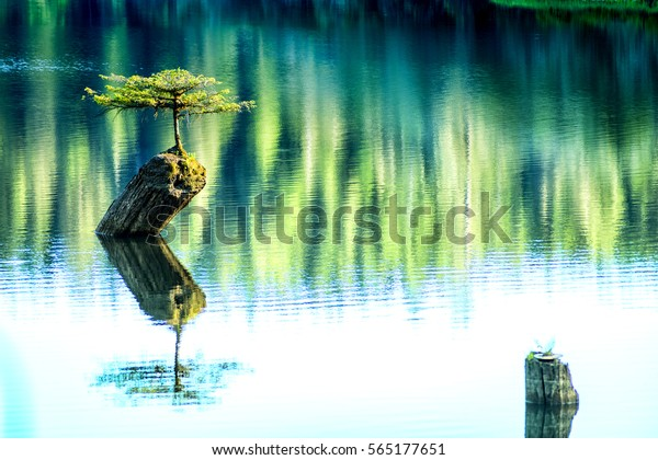Beautiful Vancouver Island - Amazing view of lonely fir bonsai reflection in Fairy Lake 5, Port Renfrew.