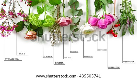 Beautiful Various Flowers Names On White Stock Photo Edit Now
