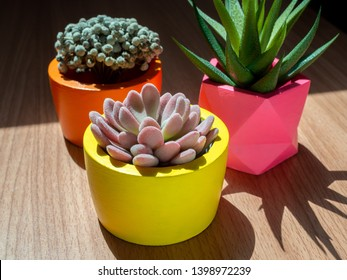 Beautiful various geometric concrete planters with cactus, flower and succulent plant on wooden background with sunshine. Colorful painted concrete pots for home decoration.