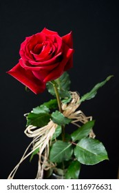 Beautiful, velvety red rose decorated with raphia against black background