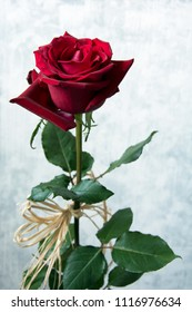 Beautiful, velvety red rose decorated with raphia against white background