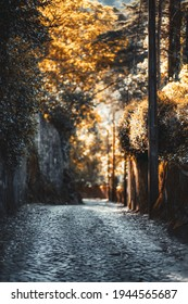 Beautiful vertical scenery with a narrow country road with paving stone stretching into the distance surrounded by stone walls, trees, and plants lit by warm orange evening sun, Sintra, Portugal
