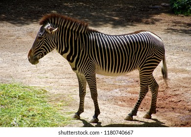 beautiful, but very proud and lonely Zebra