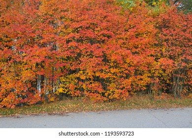 Beautiful vibrant autumn color foliage
