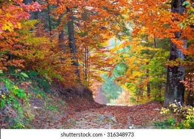 Beautiful vibrant Autumn Fall Leaves colors in forest landscape and road, horizontal