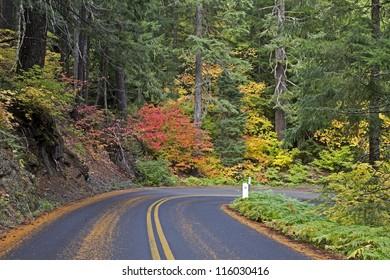 Beautiful vibrant autumn foliage on the McKenzie Pass Highway, Oregon