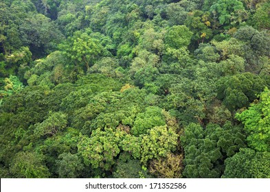 Beautiful vibrant background consisting of trees of the rain forest of Central America. Guatemala