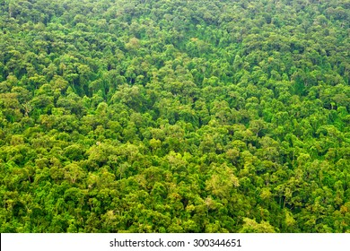 Beautiful vibrant background consisting of trees of the rain forest.
