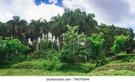 Beautiful vibrant background consisting of trees of the rain forest of Central America. Typical landscape of Dominican republic, Guatemala, Costa Rica.