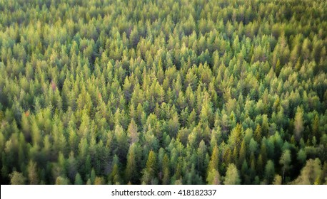 Beautiful vibrant background of spruce forest with view from above.