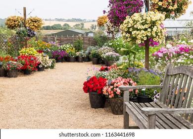 A beautiful vibrant flower garden corner with variety of flowers - Hyde Hall garden, Essex, UK