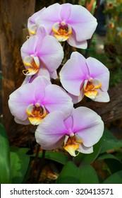 beautiful vibrant pink orchid