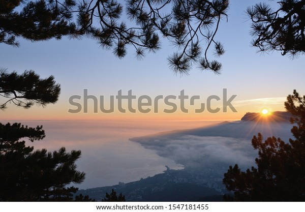 beautiful-view-above-through-pine-600w-1