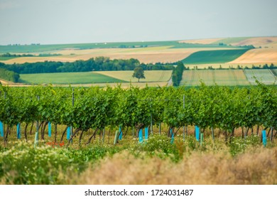 Beautiful View Of Austrian Countryside With Vineyard Vines Meadow Farmland And Rolling Hills In Summer.