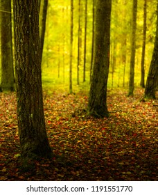 beautiful view of autumn dark forest, nice for background