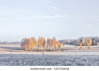 Beautiful view of autumn foggy misty morning with frosted plants, good background