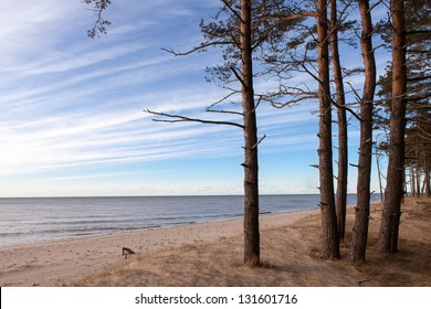 Beautiful view of Baltic sea and sky from pine tree forest