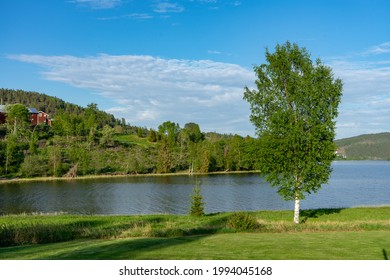 Beautiful view of birch tree next to lake. High Coast, Norrland, Sweden