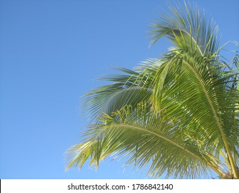 beautiful view with a blue sky and colourfull palmleaves. holiday at the island of Curaçao. with copy space. Template for design of holiday greetings, decoration packaging, postcard, poster