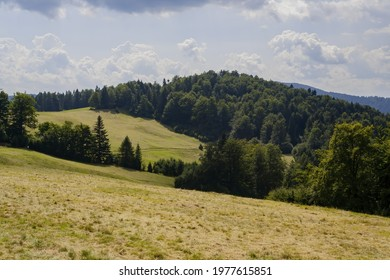 A beautiful view of brown grass with trees background on the hillside