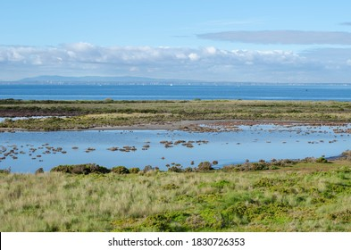 Beautiful view of the coastal wetland against the blue sea on the outskirt of Melbourne. The habitat areas of Cheetham Wetlands. Altona Meadows, VIC Australia.