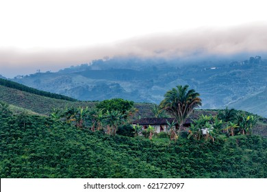 Beautiful view of a coffee plantation in the predawn light near Manizales, Colombia.