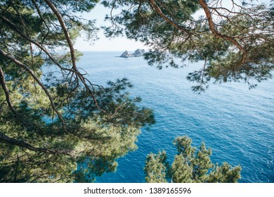 Beautiful view of coniferous or fir tree branches in the foreground against the sky, the sea and the island near Petrovac, Montenegro