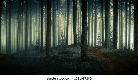 beautiful view of dark mystical forest, good background - Shutterstock ID 1211097298