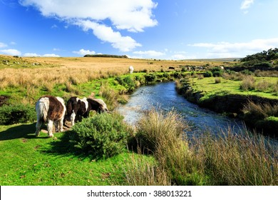 A beautiful view in Dartmoor National Park in England.