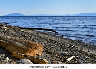A beautiful view of drift wood washed ashore along the sandy beach along coastal Vancouver Island on a sunny day