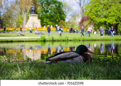 Beautiful view of a duck standing in the Vondelpark, Amsterdam, Netherland
