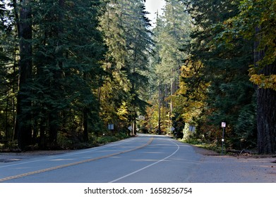 A beautiful view of empty highway 4 passing through Cathedral Grove Park surrounded by old growth forest in beautiful fall colors