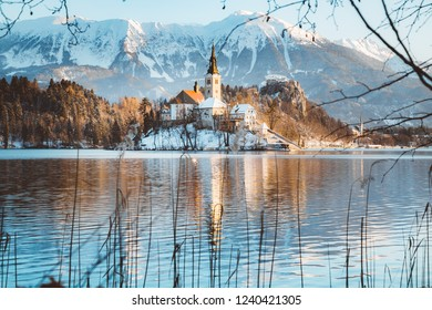 Beautiful view of famous Bled Island (Blejski otok) at scenic Lake Bled with Bled Castle (Blejski grad) and Julian Alps in the background in golden morning light at sunrise in winter, Slovenia.