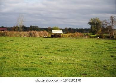 A beautiful view of a field with plants and trees growing there on a gloomy day