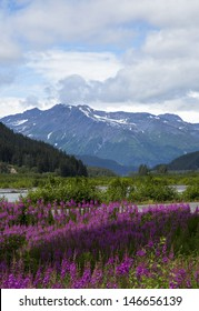 Beautiful View of Fire Weed and Mountains in Seward Alaska