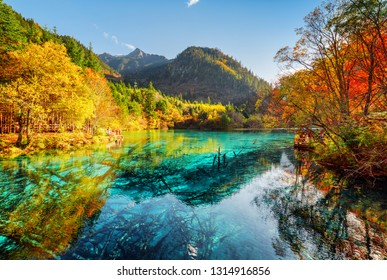 Beautiful view of the Five Flower Lake (Multicolored Lake) with azure water among fall woods in Jiuzhaigou nature reserve (Jiuzhai Valley National Park), China. Submerged tree trunks at the bottom.