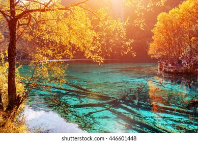 Beautiful view of the Five Flower Lake (Multicolored Lake) with azure crystal water among colorful fall woods in Jiuzhaigou nature reserve, China. Submerged ancient fallen tree trunks at the bottom.