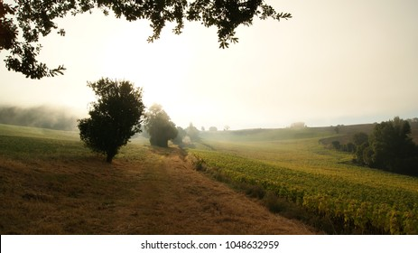 Beautiful view of a foggy morning in a field in nature with the sunflowers trees and plants in Lecture, South France