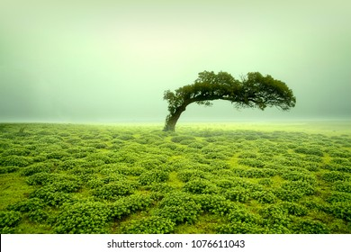 Beautiful view of green Kaas Plateau, satara, maharashtra, india.