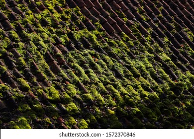 Moss On Roof Images Stock Photos Amp Vectors Shutterstock