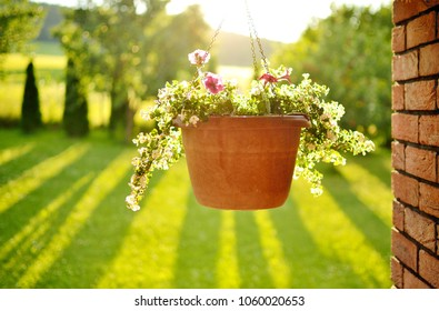 Beautiful view of the hanging flower pot, brick wall and trees casting a long shadows in the background on a summer garden at the sunset