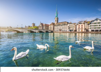 Beautiful view of the historic city center of Zurich with famous Fraumunster Church and swans on river Limmat, Canton of Zurich, Switzerland