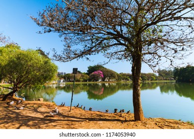The beautiful view in the Ibirapuera Park