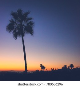 Beautiful view of an isolated palm tree with a clear, colorful sky at sunset, Corona Del Mar, California