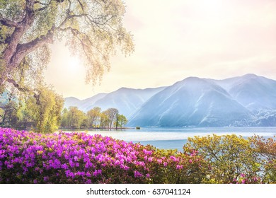 Beautiful view of the lake surrounded by mountains from the botanical flower garden of Lugano on a spring morning, Ticino, Switzerland