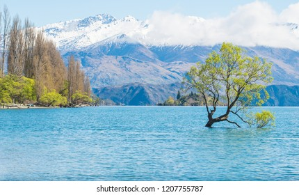 Beautiful view of lake Wanaka with the iconic lone tree in the lake. Lake Wanaka is the fouth largest lake of New Zealand.