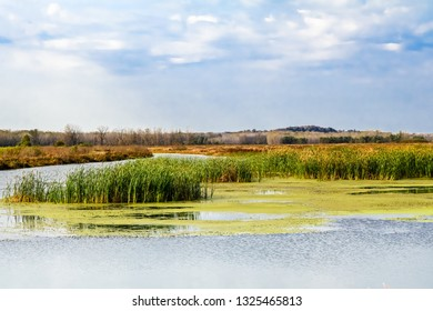 Beautiful view of Missouri wetland with tall grasses and algae in the middle and woods and blue sky in background