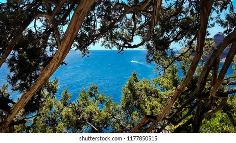 Beautiful view of the mountains, the sea and the blue sky through the branches of the trees. Crimea.